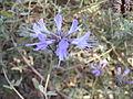 Wildflower (281684).jpg