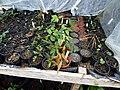 Winter greenhouse - Flickr - peganum (1).jpg