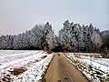 Winter path - Flickr - Stiller Beobachter.jpg