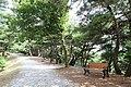Wolmyeongdong-Hiking-Trails-3.jpg