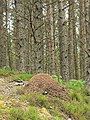 Wood ant nest - geograph.org.uk - 511497.jpg