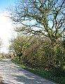 Wood beside Ash Lane - geograph.org.uk - 369646.jpg