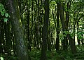 Woodland - geograph.org.uk - 183248.jpg