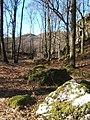 Woodland below Low Crag - geograph.org.uk - 541284.jpg