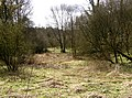 Woodland glade, Hurtmore Bottom, Shackleford - geograph.org.uk - 171802.jpg