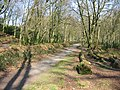 Woodland path - geograph.org.uk - 384020.jpg