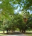 Woodlawn Cemetery - Main Drive.JPG
