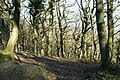 Woods on Quantock Common - geograph.org.uk - 131600.jpg
