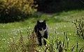 Wraxall 2012 MMB 32 Smudge.jpg