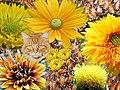 Yellow mosaic (398707126).jpg