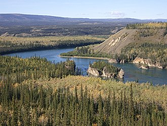 Borealer Nadelwald am Yukon River in Alaska