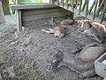 ZOO Ústí n L - dolní výběh jelenů 05.jpg