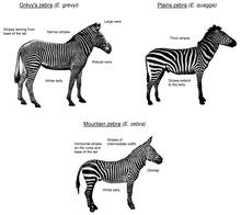 Una ilustración que muestra las tres especies de cebras existentes.
