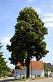 Ziersdorf Linde 1.jpg