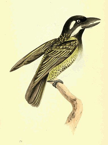 Zoological Illustrations Volume II Plate 72.jpg