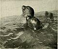 Zoological Society bulletin (1911) (14740276166).jpg