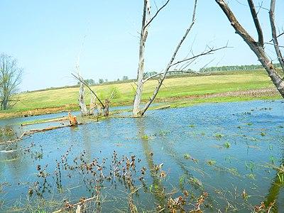 """""""залишки"""" одного из заплавів озера.JPG"""
