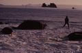 (Jubany) Recuento de mamíferos (5).png