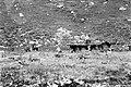 Альплагерь «Узункол» 72-76 (42).jpg