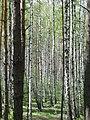 Березки - panoramio (3).jpg