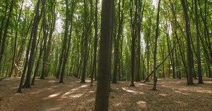 File:Буковий ліс.webm