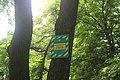 Дуб черешчатий перед аграрним коледжем 01.jpg