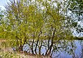 Затока Десенка 07.jpg