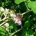 Милая пчелка.jpg