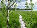 Мосточки к озеру - panoramio.jpg