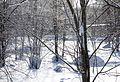 Муравленко февраль 2014 - panoramio (23).jpg