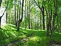 Парк возле усадьбы muižas parks (4) - panoramio.jpg