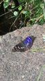 Природа в городе 29.png