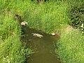 Стрельна. Река Кикенка у ж.д 02.jpg