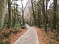 Тисо-самшитовая роща (туристическая тропа),1 км от Хосты вверх по течению реки, Хостинский район, Сочи, Краснодарский край.jpg