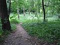 То ли лес, то ли парк.JPG