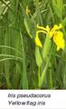 الشكل (2-8-3-1) صور للنباتات المستعملة في الأراضي الرطبة (1) (ب).png