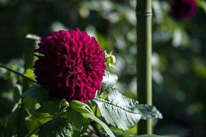 عکس از گلها و گیاهان باغ بوتانیکال تفلیس - گرجستان 24.jpg