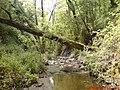 غابات الفرنلق-DSC00015.JPG