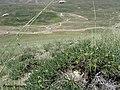 منظره زیبا از آلواریس از کنار لانه یک پرنده - panoramio.jpg