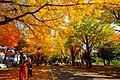北海道大学(Hokkaido University) - panoramio (1).jpg