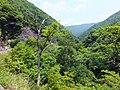 揖斐の山中 - panoramio.jpg