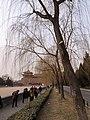 故宫护城河边的柳树 - panoramio.jpg