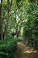 東高根森林公園 - panoramio (45).jpg