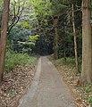 森の道 - panoramio.jpg