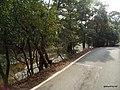 県道12号線 - panoramio.jpg