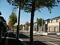 街路樹も秋 - panoramio.jpg