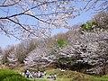 近つ飛鳥風土記の丘にて 2013.3.30 - panoramio.jpg