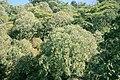 단양 영천 측백나무 숲.jpg