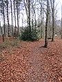 -2018-12-15 Path through Bacton woods (2).JPG