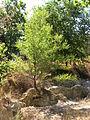000509 - Lagunas de Ruidera (4312664281).jpg